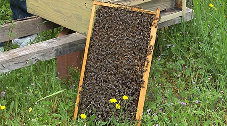 Photo of Пролетниот мраз ги намали приносите на мед во Кочанско