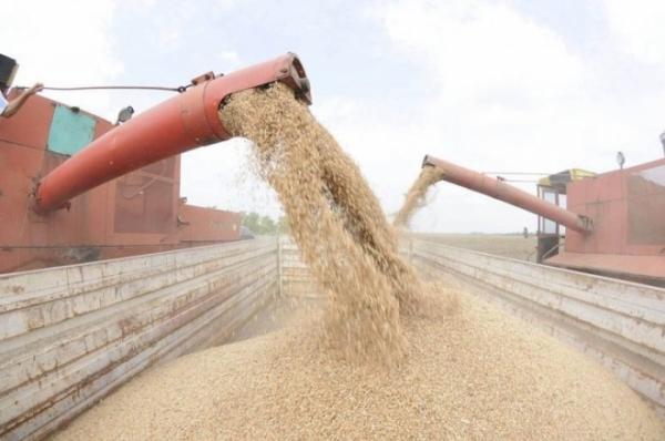 Photo of ССК: Државата да откупи 50.000 тони пченица од годинашниот род