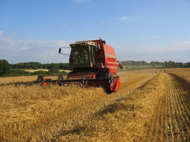 Photo of Слабиот принос на пченицата може да го поскапи лебот