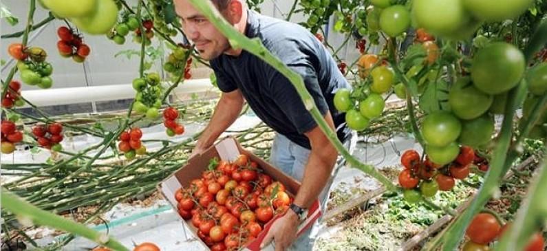 Photo of Земјоделците од кумановско аплицираат за мерките од ИПАРД 2 програмата