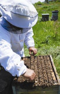 Photo of Работа во пчеларникот во Јули