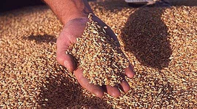 Photo of Во пожар изгореа 450 тони неожнеана пченица
