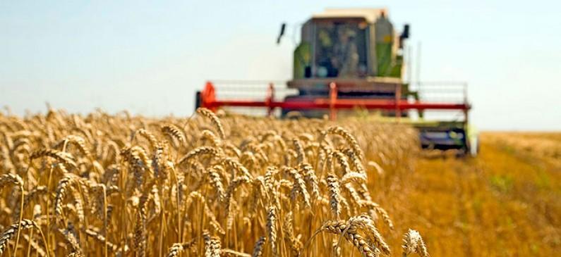 Photo of Во тек жетвата на пченицата и јачменот во Дебарско