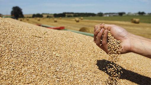 Photo of Жетвата на пченица покажува помал род