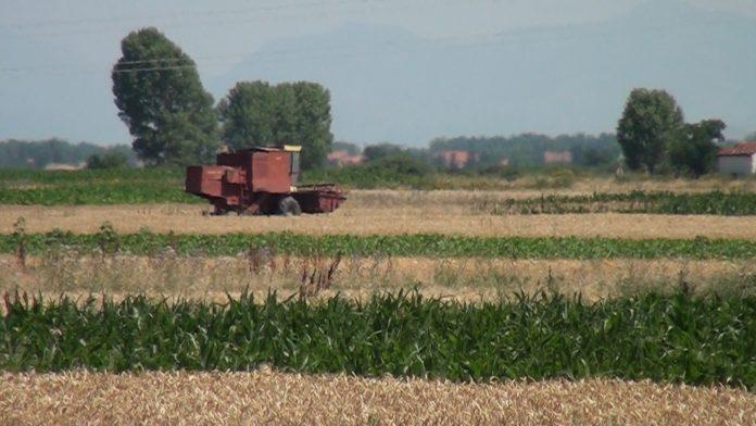 Photo of Преполовен род, без пласман и цена почна жетвата во Пелагонија