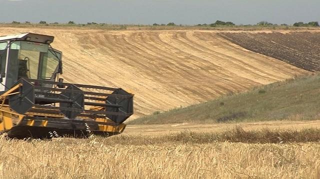 Photo of Берзански цени на житото