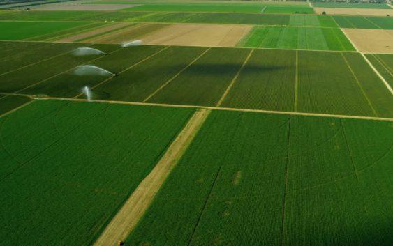 Во Кочанско над 100 хектари државно земјоделско земјиште под закуп