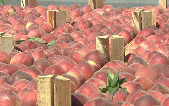 Македонија губи 20 отсто од земјоделското производство поради несоодветно складирање