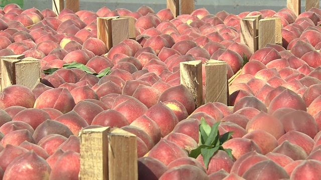 Photo of Македонија губи 20 отсто од земјоделското производство поради несоодветно складирање