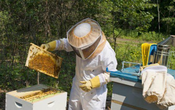 Тешка година за пчеларите