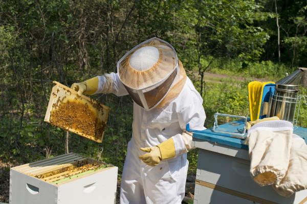 Photo of Тешка година за пчеларите