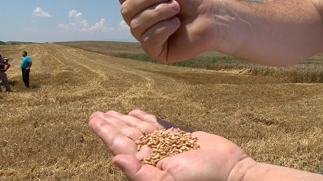 Photo of Субвенции: Поднесување барања за складирање на пченица