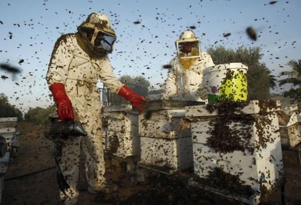 Photo of Штипските пчелари бараат прогласување на елементарна непогода