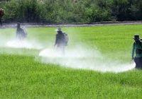 Правилна употреба на пестицидите