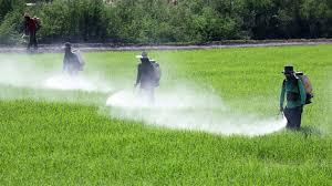 Photo of Правилна употреба на пестицидите