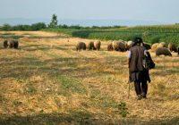Една година по поплавите, сточари од Синѓелиќ без стада, земјоделци без земјиште