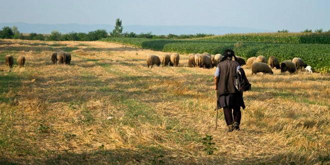 Photo of Една година по поплавите, сточари од Синѓелиќ без стада, земјоделци без земјиште