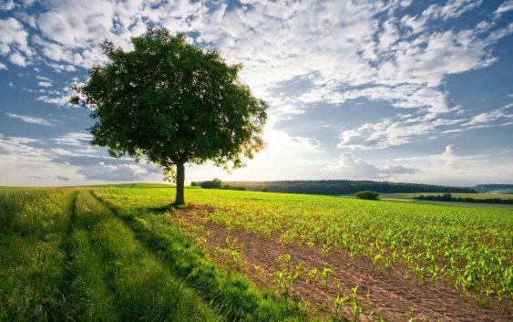 Критична состојбата со земјоделските култури, нема доволно влага во почвата