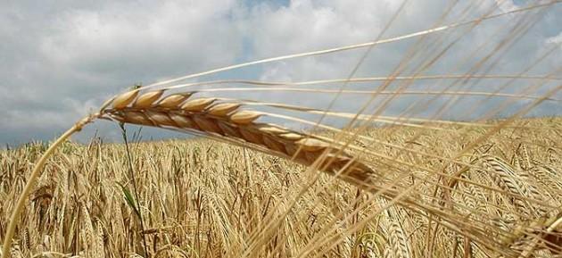 Photo of Топлотниот бран го намалил земјоделскиот род, најпогодени житните култури