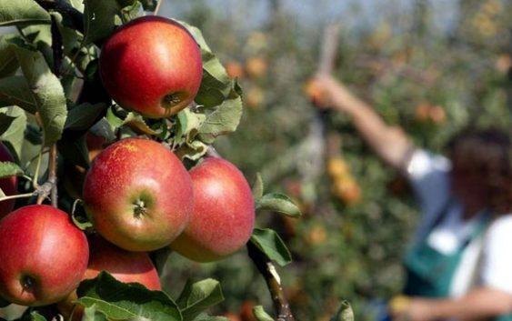 ФФРМ бара средба со Николовски за проблемите во јаболкопроизводството