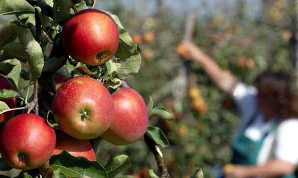 Photo of ФФРМ бара средба со Николовски за проблемите во јаболкопроизводството