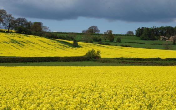 Јавно отворање на понудите за давање под закуп на земјоделско земјиште до 3 хектари