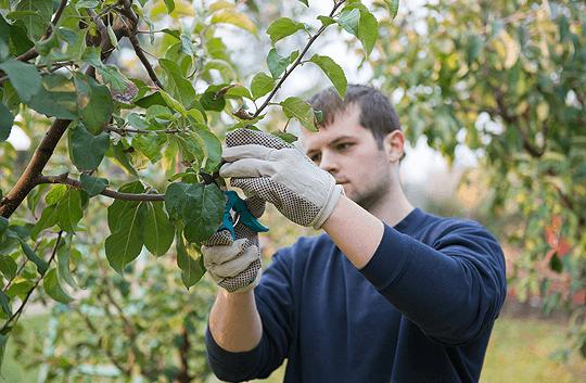 Во Кочанско слаб интерес за мерката Млад земјоделец