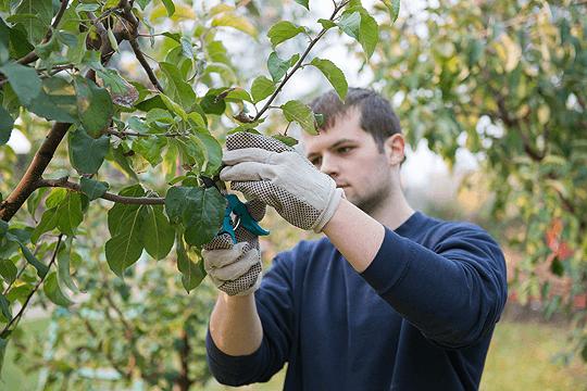 Photo of Во Кочанско слаб интерес за мерката Млад земјоделец