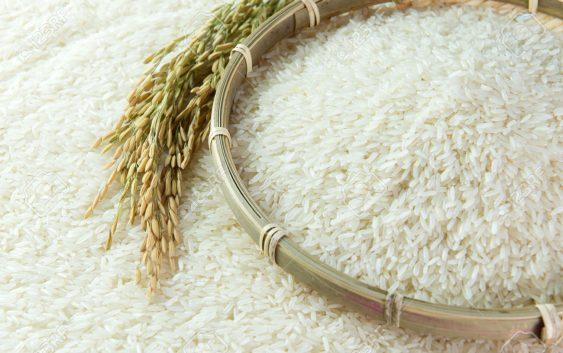 Почна жетвата на оризот во кочанско