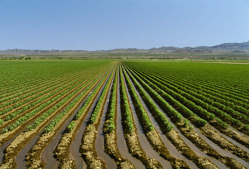 Photo of Расцепканоста на македонското земјоделство- проблем за производството