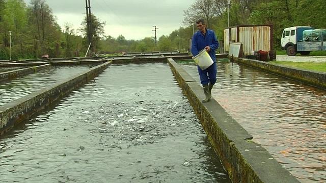 Photo of Македонија наскоро на европски пазар со рибни производи