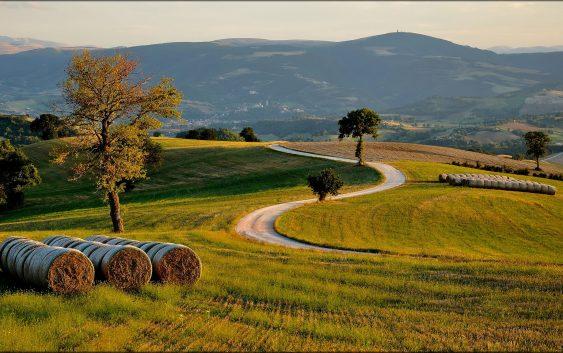 Земјоделците од Куманово, Липково и Старо Нагоричане најмногу аплицирале за субвенции за житни култури