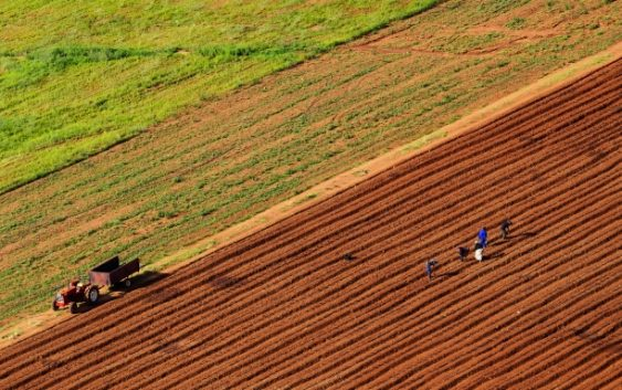 Се укинува Законот за продажба на земјоделско земјиште во државна сопственост