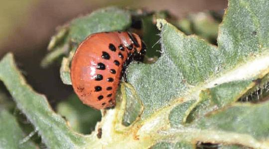 Биолошка заштита на растенијата со помош на корисни микроорганизми