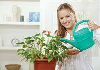 Како да се залеваат растенијата во зима?