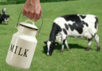Привршува пријавувањето субвенции за млеко