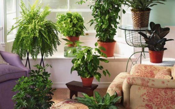 6 Собни билки за прочистување на воздухот во домот