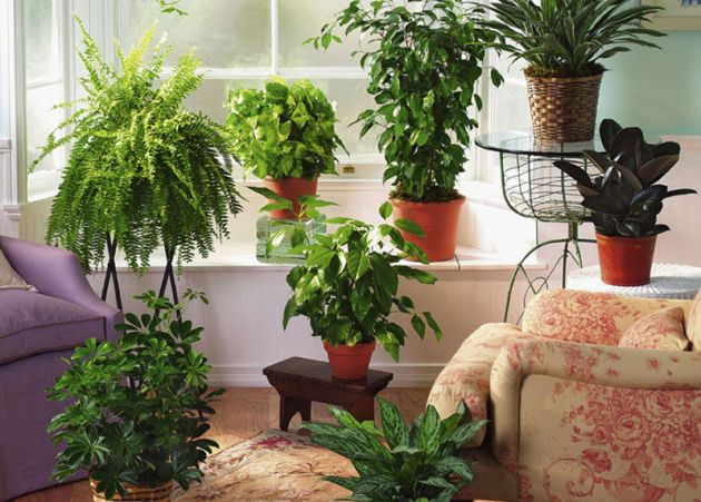 Photo of 6 Собни билки за прочистување на воздухот во домот