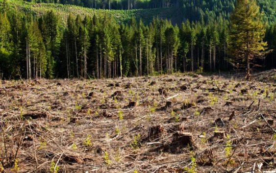 МЗШВ ги плати неизмирените обврски кон сопствениците на приватни шуми за 2016 година