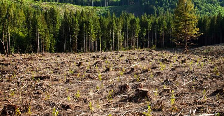 Photo of МЗШВ ги плати неизмирените обврски кон сопствениците на приватни шуми за 2016 година