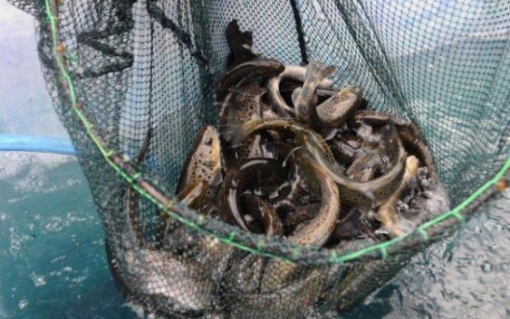 Јавен повик за финансиска поддршка во Рибарството и Аквакултурата за 2017 година