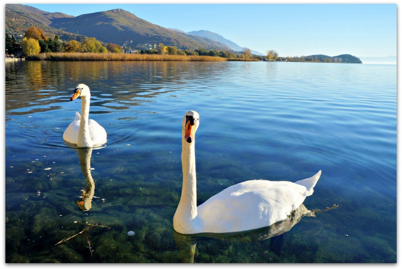 Photo of Тилевски вети мерки за поголема заштита на Охридското Езеро