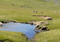 Сточарите бараат долгорочни концесии за пасиштата