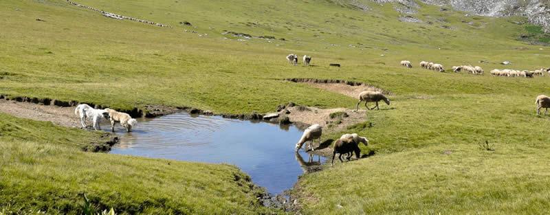 Photo of Сточарите бараат долгорочни концесии за пасиштата