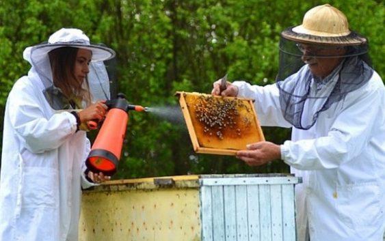 Пчеларите бараат закон владата нуди мерки