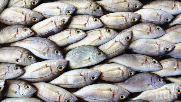 Photo of Повик за финансирање на рибарството