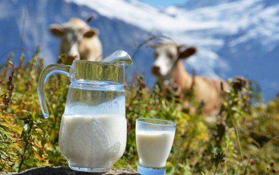 АФПЗРР: Производителите на млеко и јајца до 5 ноември да поднесат барања за субвенции