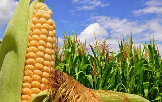 Приведени 20 земјоделци за злоупотреби со земјоделски субвенции