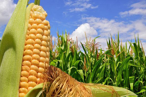 Photo of Приведени 20 земјоделци за злоупотреби со земјоделски субвенции