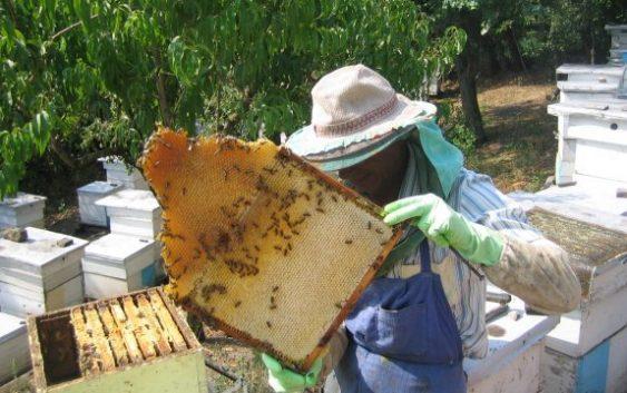 Николовски: Неопходни се системски мерки за поддршка на пчеларството
